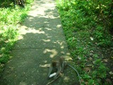 Как обезьяна стала человеком!